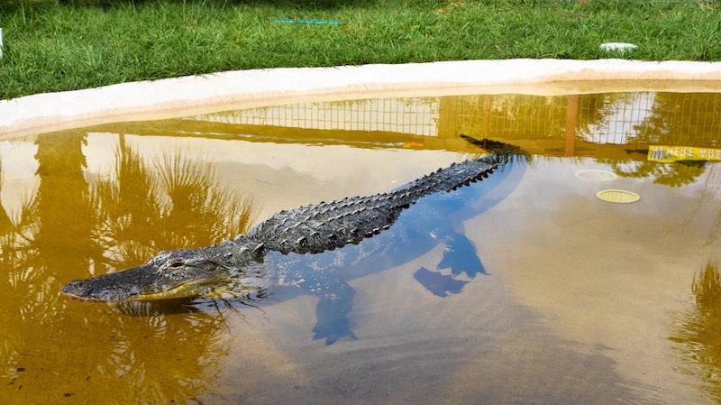 Wild Florida 18